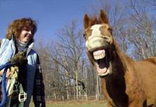 おれんじのうだうだ日記~時にはふんがふんが-horse
