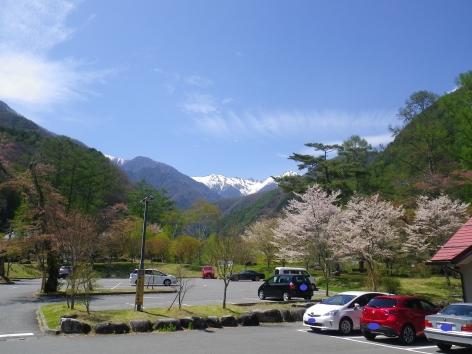 こまくさの湯 2016 桜