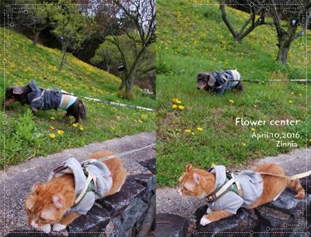 季節の花「チューリップ」を見に Part2⑤
