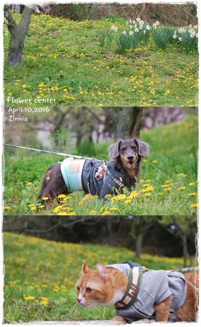 季節の花「チューリップ」を見に Part2⑥
