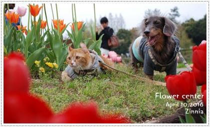 季節の花「チューリップ」を見に Part2④