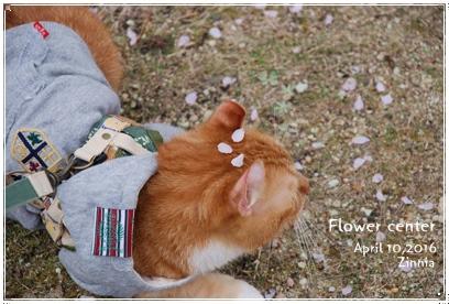 季節の花「チューリップ」を見に Part2③