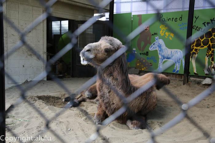 ツガルさん 野毛山動物園