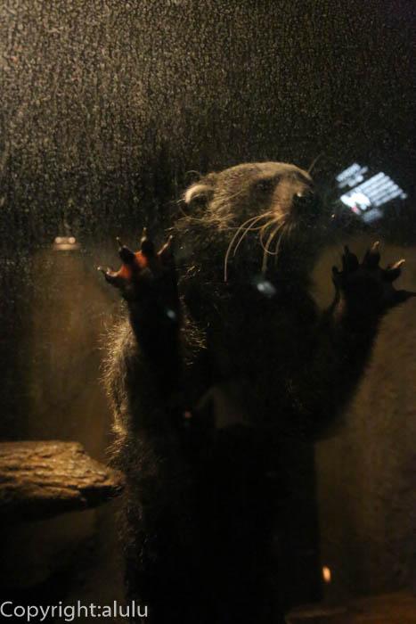 ピントロング 動物写真