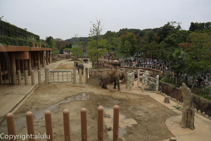 東山動物園 アジアゾウ