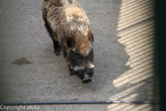 羽村市動物園 ニホンイノシシ サル おんぶ
