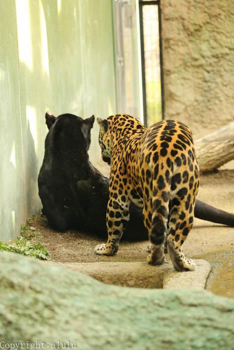 日本平動物園 動物写真