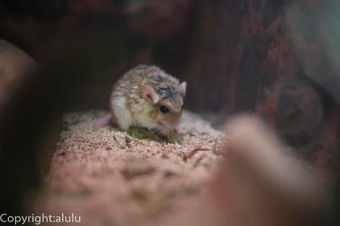 上野動物園 ネズミ