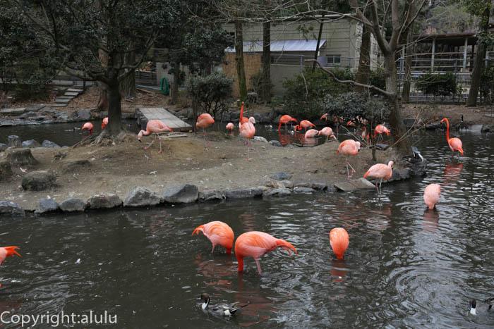 フラミンゴ 池