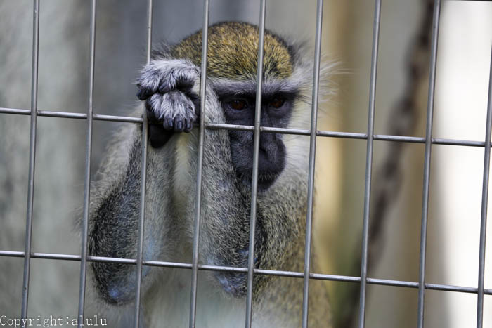 天王寺動物園 サル さる