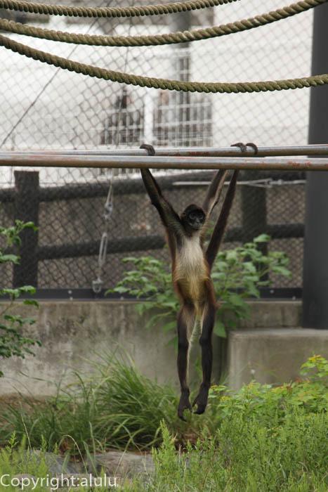 日本平動物園 さる サル
