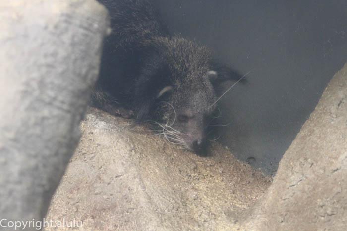 東山動物園 ピントロング