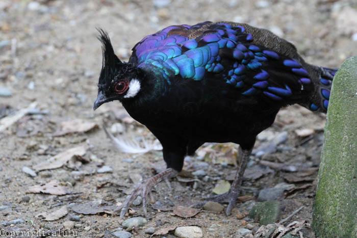 浜松市動物園 動物写真 鳥
