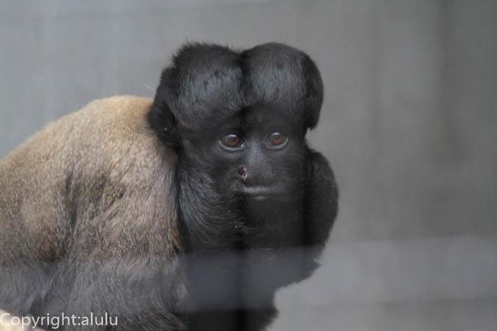日本平動物園 サル さる