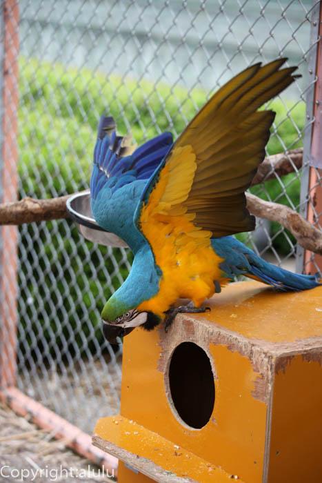 伊豆 動物園 ルリコンゴウインコ
