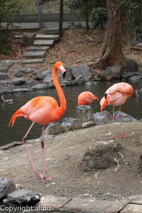 東山動物園 ベニイロフラミンゴ 画像