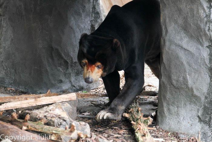 のんほいパーク 動物園 マレーグマ