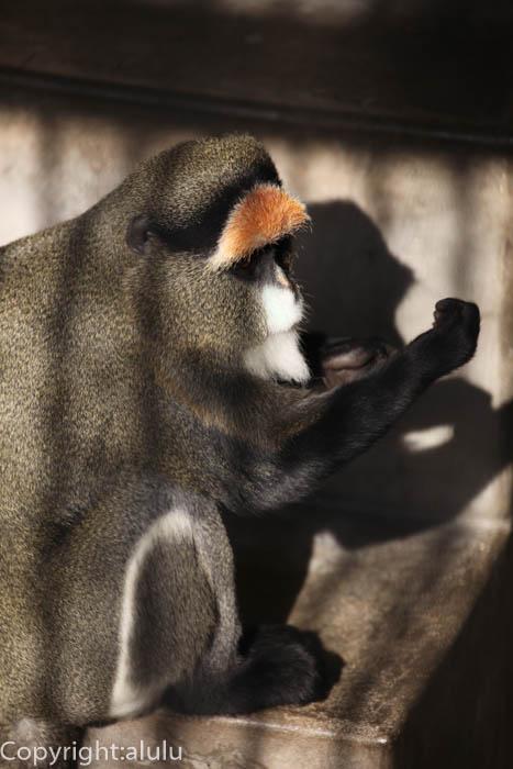 福岡市動物園 ブラッザグェノン