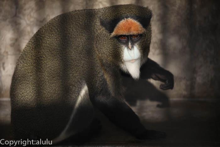 ブラッザグェノン 動物写真 サル