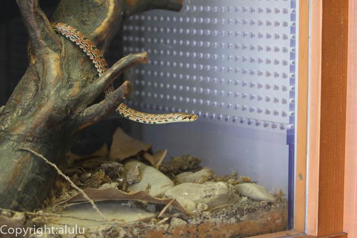 日本平動物園 爬虫類 ジムグリ