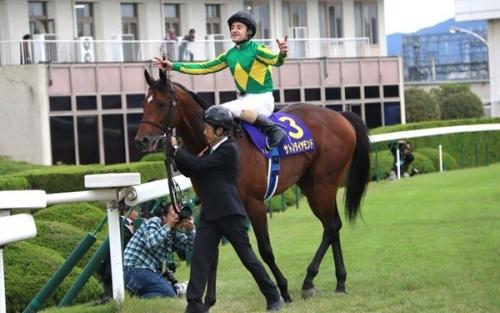 【競馬】サトノダイヤモンド 次走は有馬記念、香港カップ、香港ヴァーズの3択(年内休養の可能性もあり)