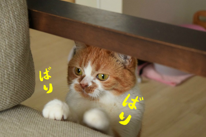 DSC_0159da.jpg