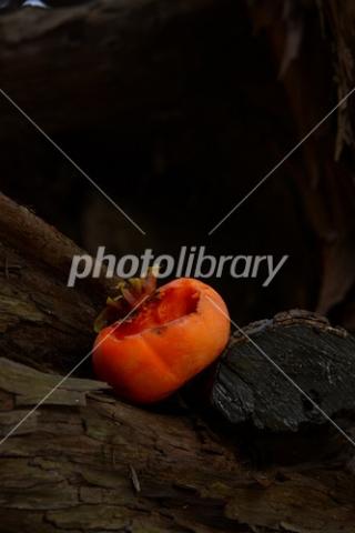 4648264 熟柿