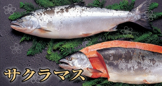 sakuramasu-1-750-400.jpg