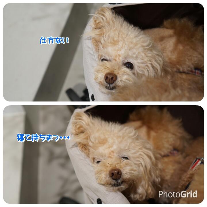 20160927221959a2d.jpg