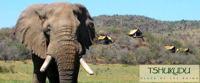 夢がかなった南アフリカのサファリ!Tshukudu Bush Lodge Pilanesberg