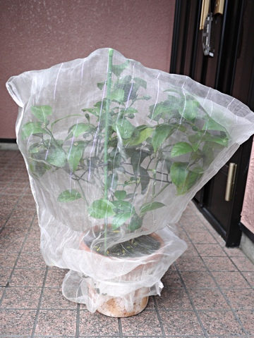 gardening205