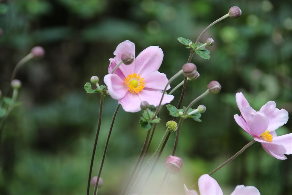 季節の花ほか_5