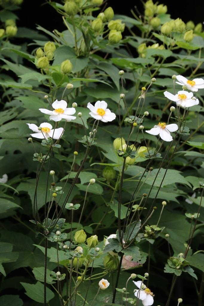 季節の花ほか_8