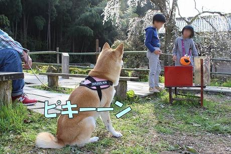 s-chieko160413-IMG_0966
