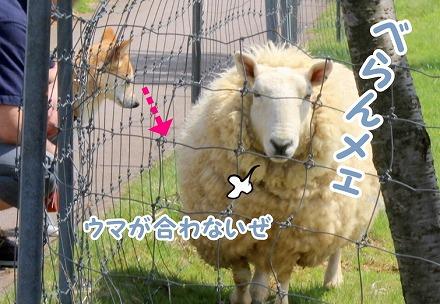 s-makiba160522-1-IMG_1216