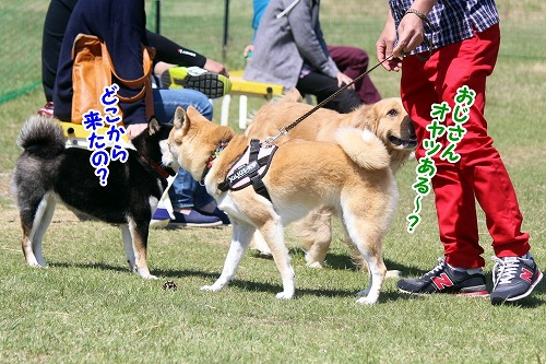 s-dogrun160716-IMG_1830
