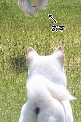 s-1dogrun160718-1-IMG_1899