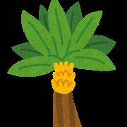 ラテン(バナナ