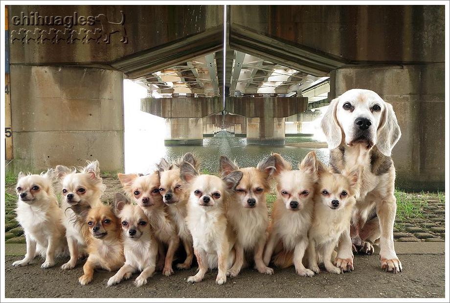 鉄橋の下に11匹の犬が集合