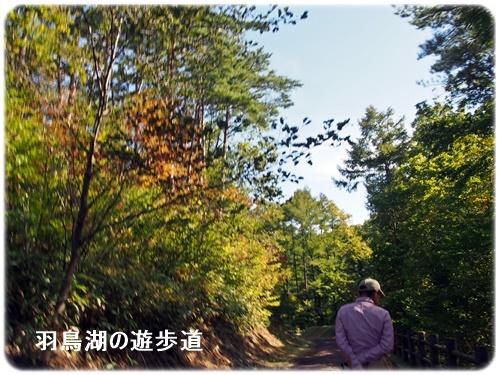 羽鳥湖の遊歩道