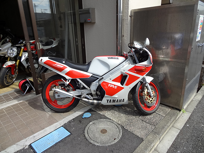DSC04975-kai.jpg