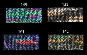 1374雁皮テープ絣カラバリ
