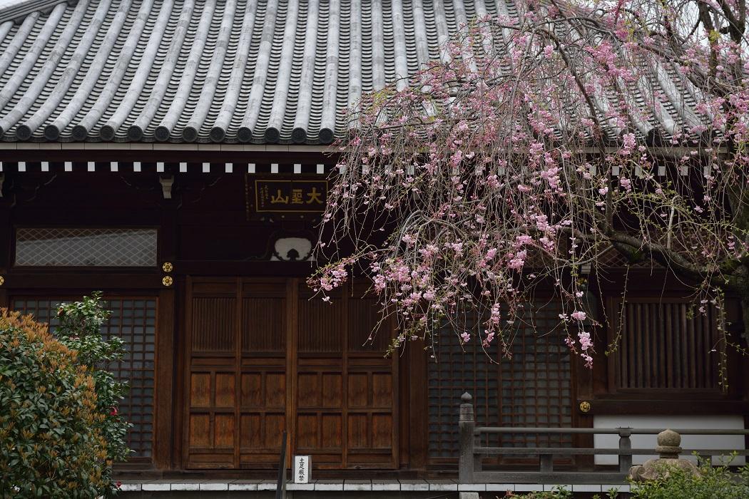 都心の桜 2016