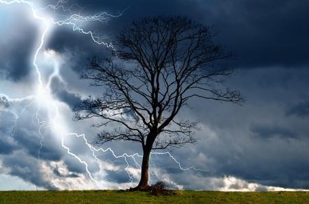 tree-164025_640.jpg