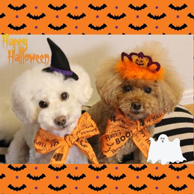 とりあえず・・・Happy Halloween^^;