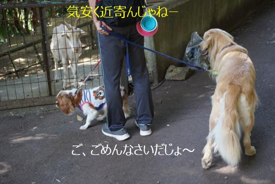 DSC04747.jpg