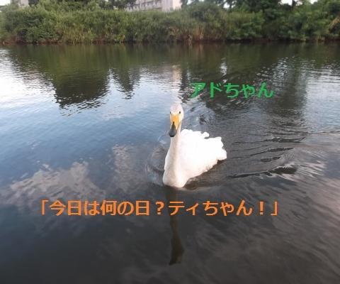 DSCF1010_convert_20160814163746.jpg