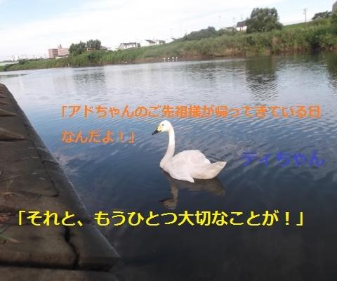 DSCF1020_convert_20160811095841.jpg