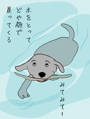 泳ぐラブラドール