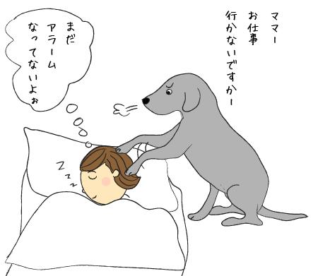 目覚ましラブラドール